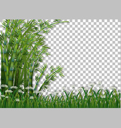 Bamboo tree and grass on transparent background vector
