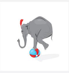 Circus elephant standing on ball vector