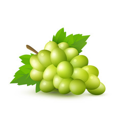 Green grape with leaves and clipping path vector