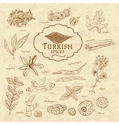 Set of spices and herbs cuisines Turkey on old vector image