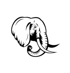 African elephant loxodonta african bush elephant vector