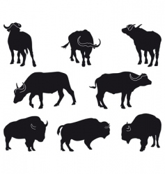 Bison and buffalo vector