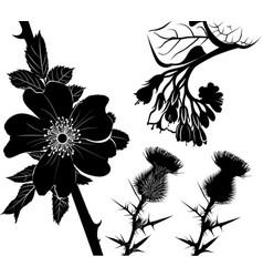 collection flower plants comfrey milk thistle vector image