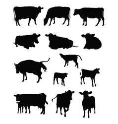 cows silhouettes vector image