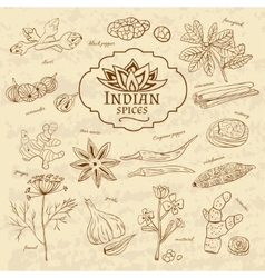 Set of spices and herbs cuisines of India on old vector image