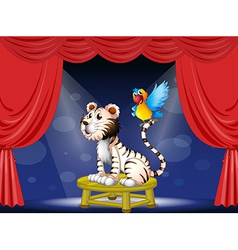 A parrot standing at the tail of a tiger vector image vector image