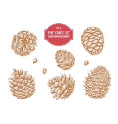 collection of hand drawn pine cones vector image