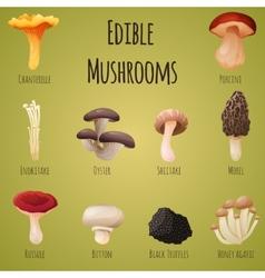 Edible mushroom vector