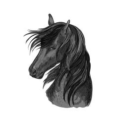 Horse head sketch of black arabian stallion vector