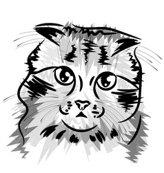 logo cat for t-shirt design or outwear vector image