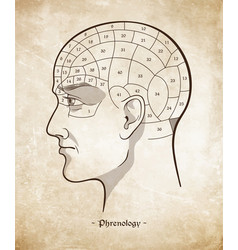 Phrenology retro pseudoscience poster or print vector