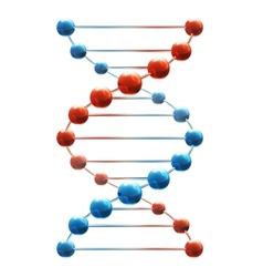 Deoxyribonucleic acid vector image vector image