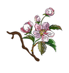 apple tree branch vector image