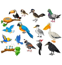 Different kinds of birds set vector