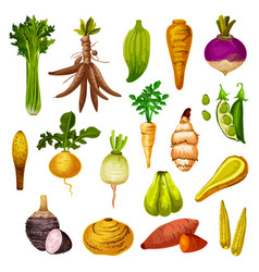 Exotic root vegetables and veggies vector