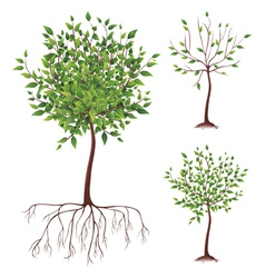 Realistic green tree with roots vector