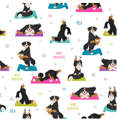 Yoga dogs poses and exercises bernese mountain vector