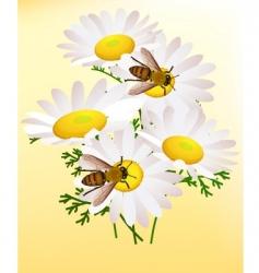 bee on chamomile vector image