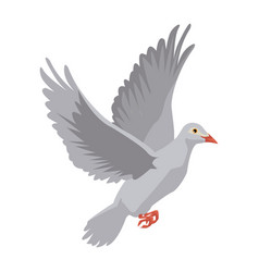 flying white dove on white background as symbol of vector image