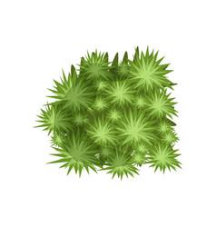 Green plant landscape natural design element top vector