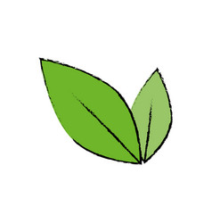 leaves nature plant vector image