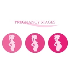 Pregnancy stages pregnant woman vector