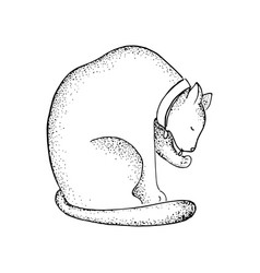 fat cat in collar line art vector image vector image