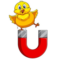 Little chick standing on magnet vector image vector image