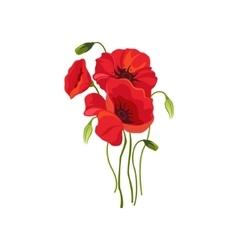 Poppy Hand Drawn Realistic vector image