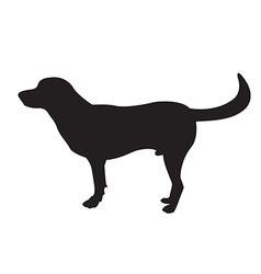 image of an dog labrador vector image
