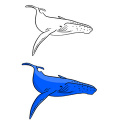 blue whale sketch doodle hand drawn vector image