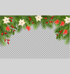 christmas tree branches vector image