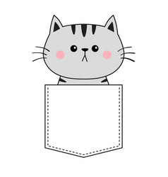 cute gray cat sitting in pocket pink cheeks vector image