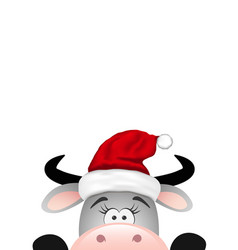 funny gray bull on white background vector image