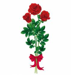 roses bouquet vector image vector image