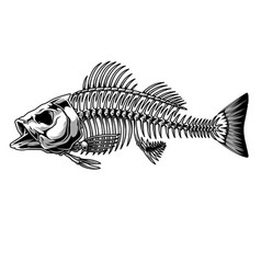 Bass fish skeleton monochrome concept vector