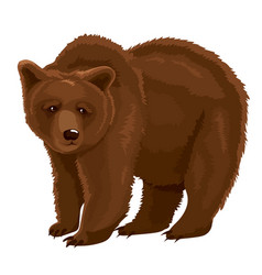 Brown bear vector