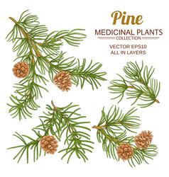 pine set vector image