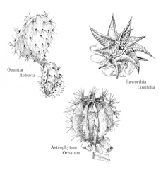 Cacti and succulent ink sketch set vector image