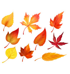 Autumn foliage of fall falling leaves icons vector