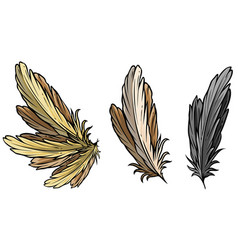 cartoon detailed bird feathers and wing set vector image