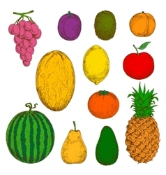 Fresh and juicy fruits sketches vector image