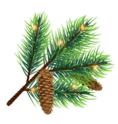 realistic fir tree branch with cone and vector image