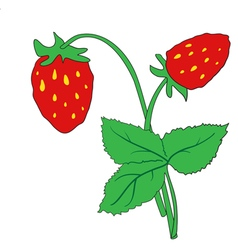 The bush of ripe strawberries vector image