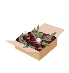 Fresh purple mangosteens in a shipping box vector