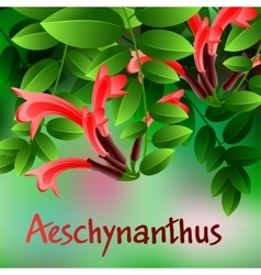 Beautiful spring flowers Aeschynanthus Cards or vector image