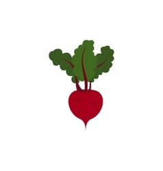 Beetroot with leaves icon flat style vector image