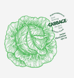 cabbage hand drawn vegetable engraved style vector image