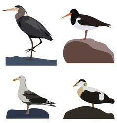 Set of sea birds vector