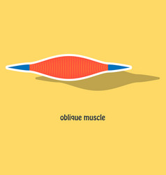 Sticker external oblique muscles of chest thorax vector